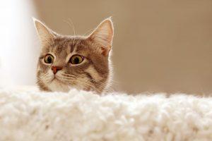 מגרדת לחתולים
